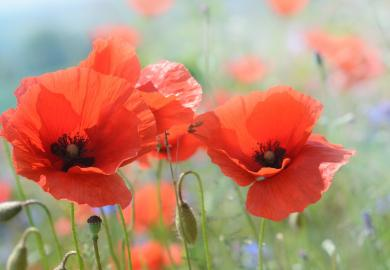 Itinerary - Remembrance Sunday