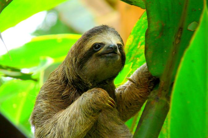 Holiday image - Sloth in Puerto Viejo Costa Rica. 1