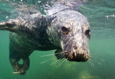Itinerary - Anglesey Seal & Puffin Boat Trip