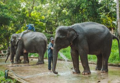 Itinerary - Visit an Elephant Sanctuary