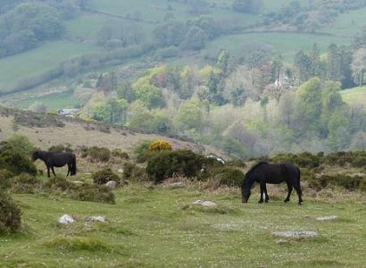 An insight into Exmoor National Park
